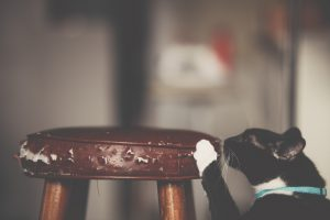 cat-scratching-the-stool-post